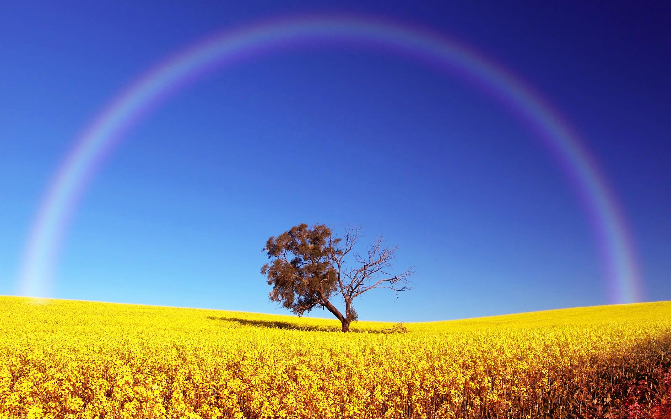 2560x1600 Rainbow Over Field Desktop PC And Mac Wallpaper