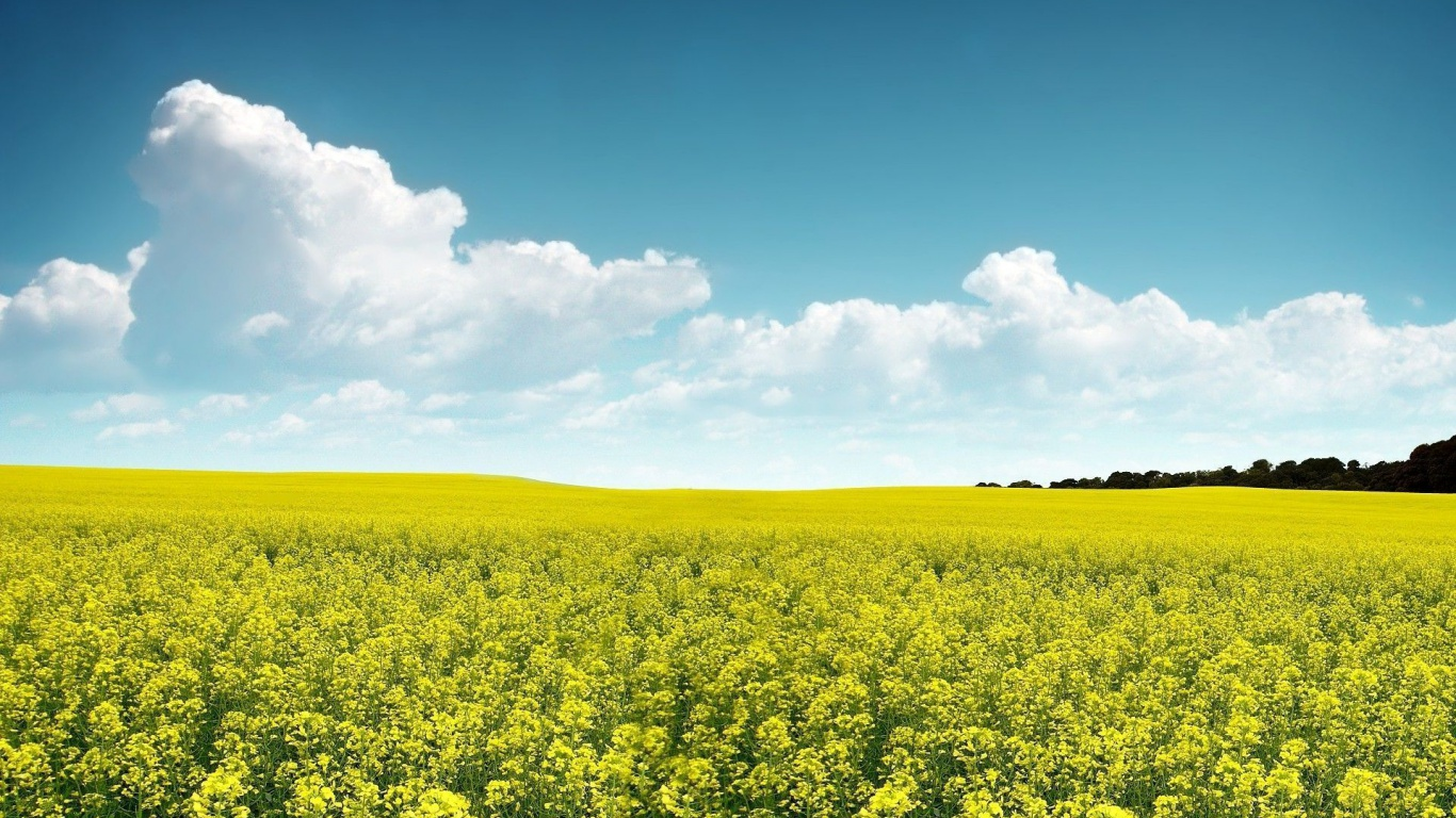 1366x768 Rape Field Clouds & Sky