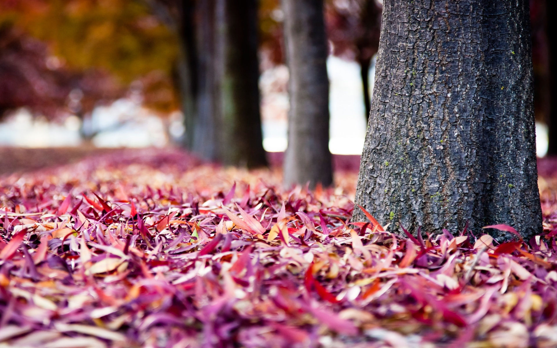 Labels Red Autumn Leaves Photography Hd Wallpapers For: Red Autumn Leaves Stock Photos