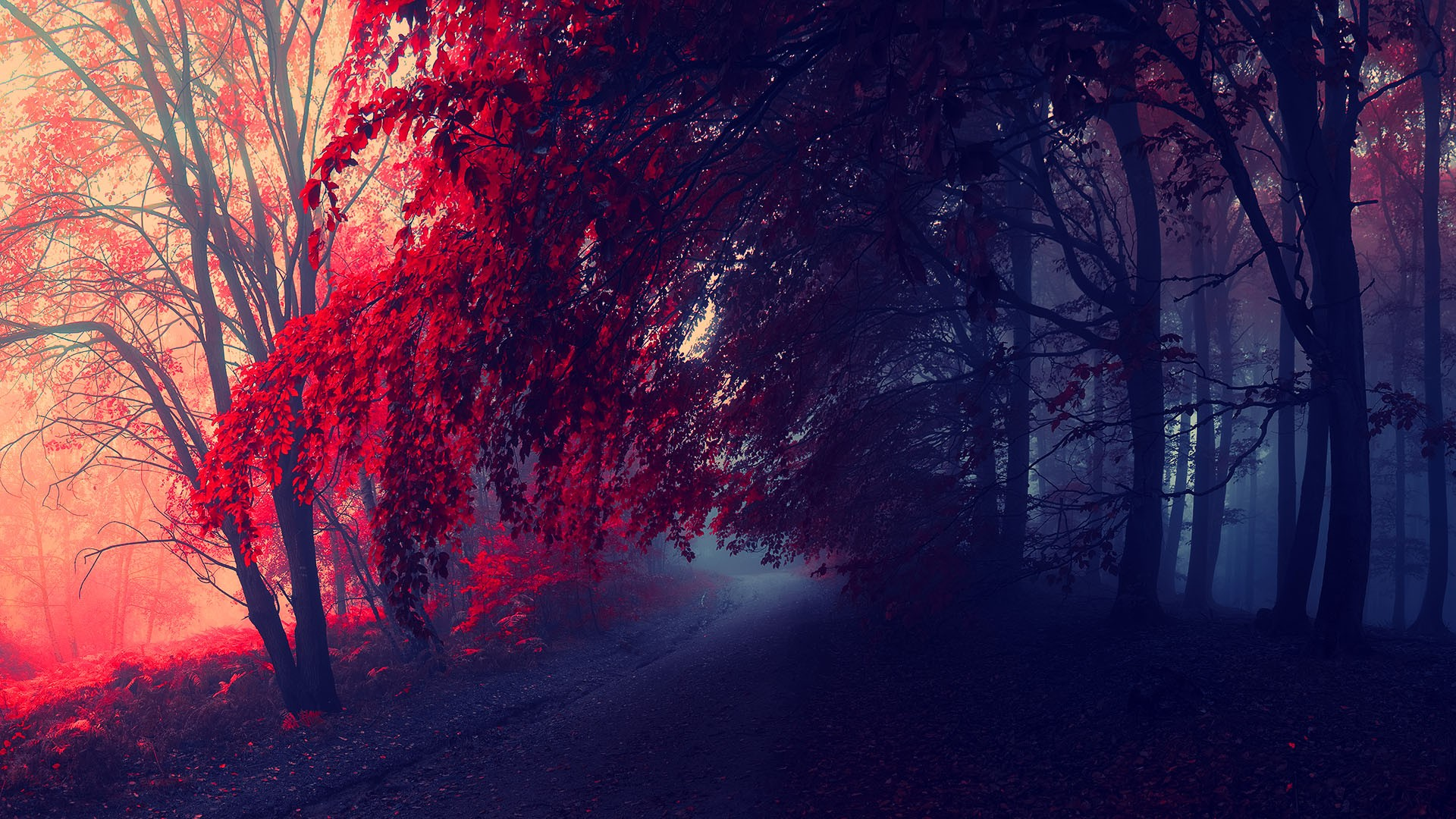 red fall wallpaper - photo #21