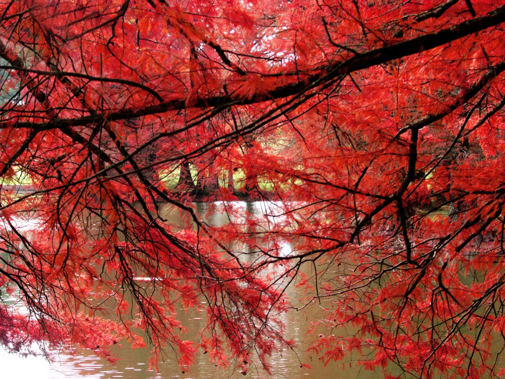 1024x768 red curtain desktop pc and mac wallpaper - Wallpaper and curtain sets ...