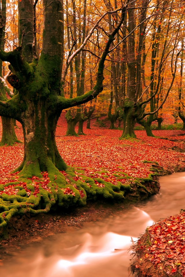 red forest%2C  autumn%2C