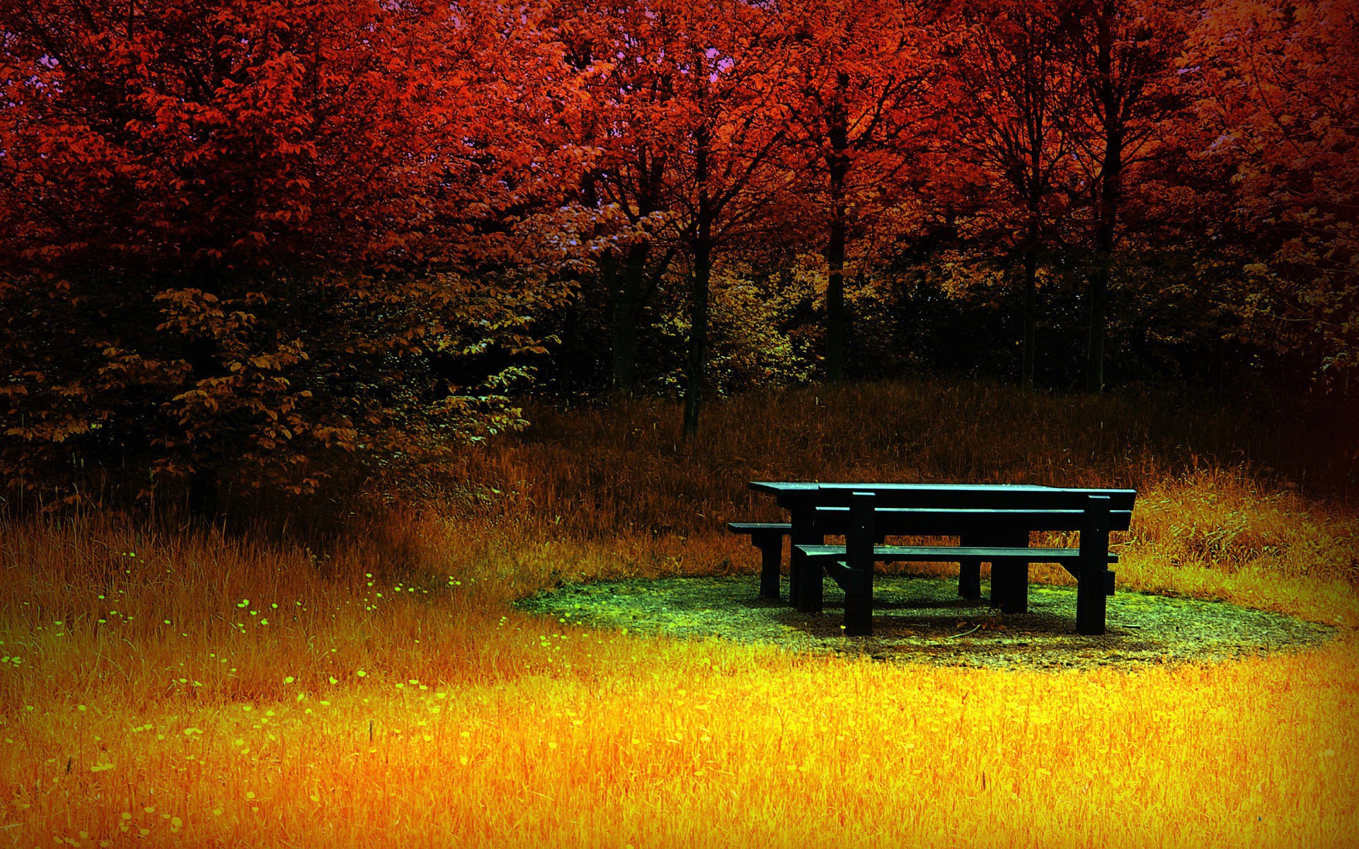 Red Forest Yellow Grass Bench Wallpapers Red Forest
