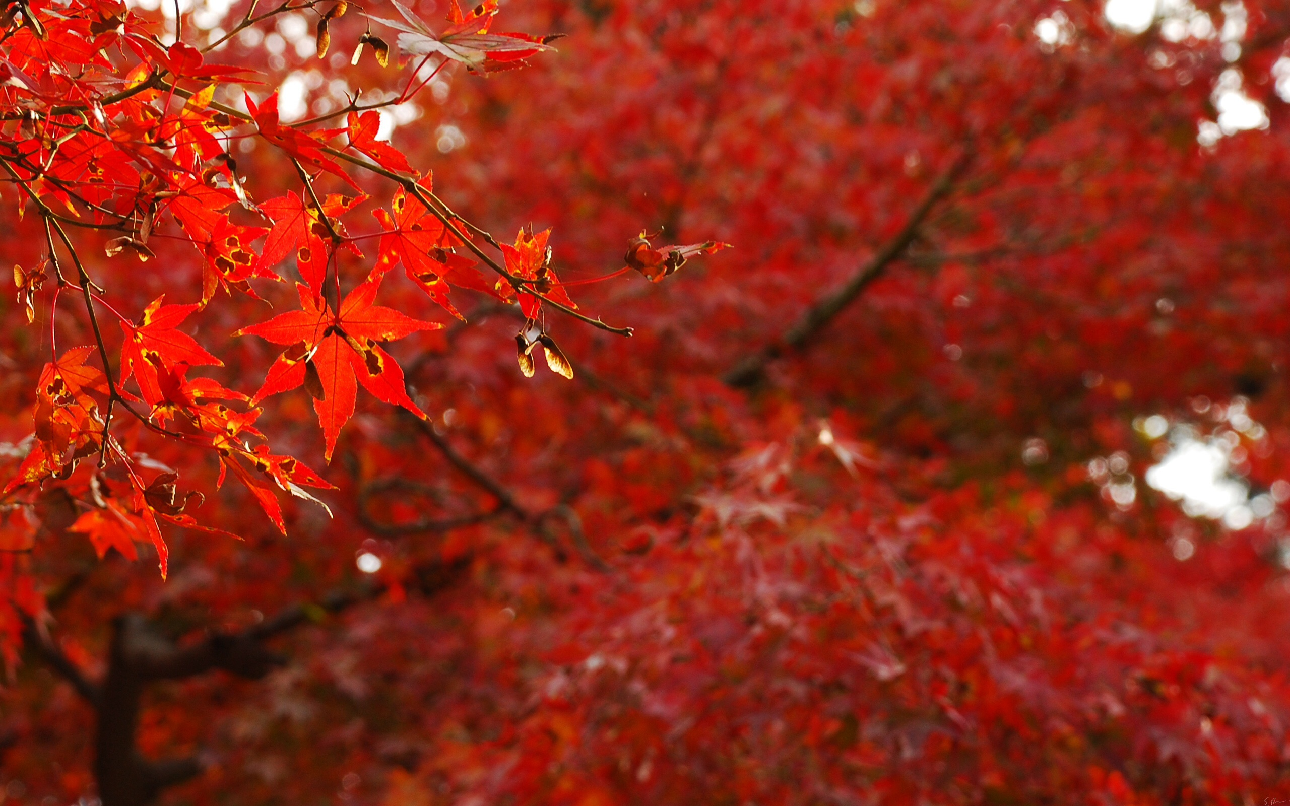 Labels Red Autumn Leaves Photography Hd Wallpapers For: Red Leaves Stock Photos
