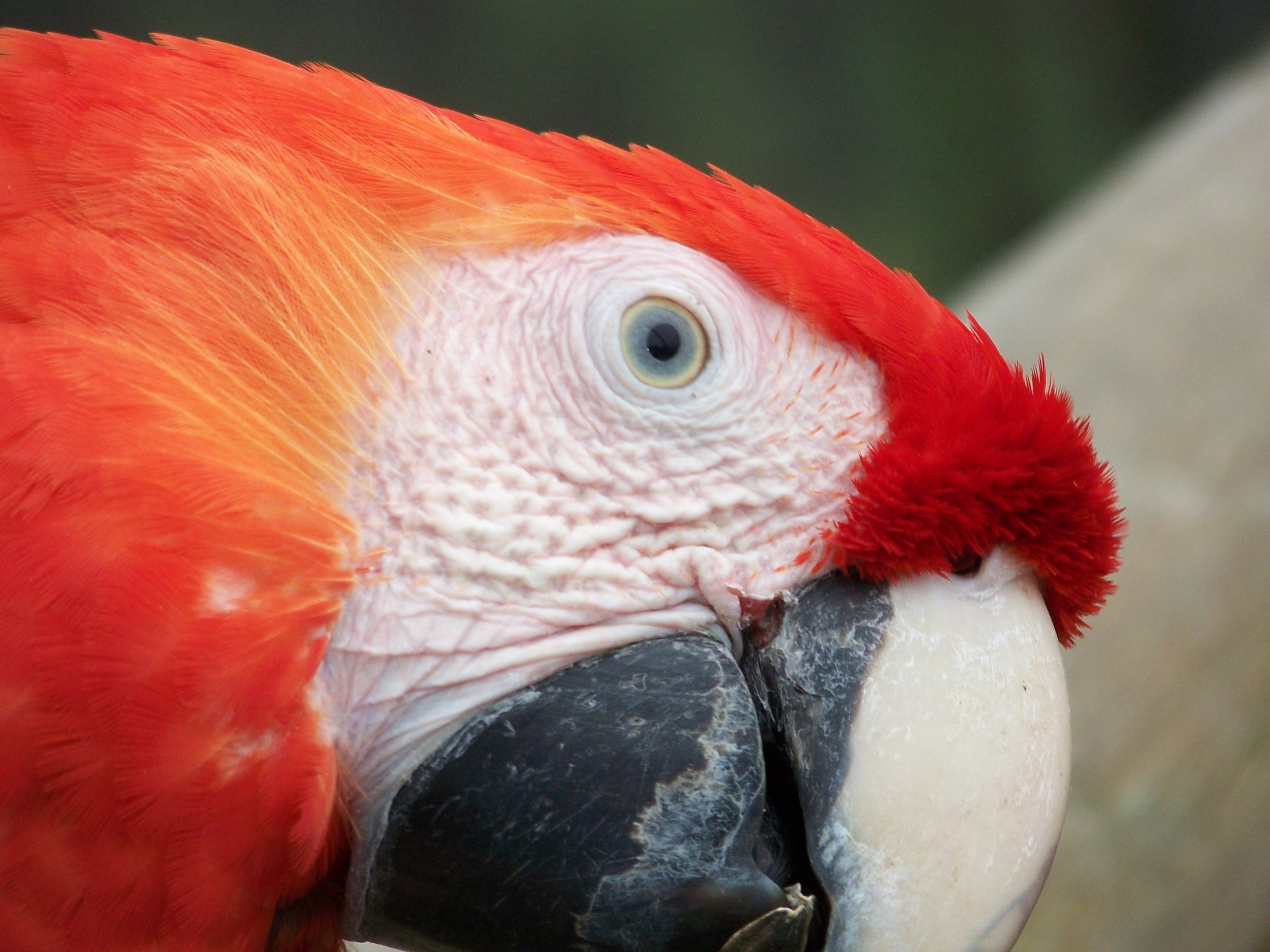 2560x1440 Red Macaw Face YouTube Channel Cover