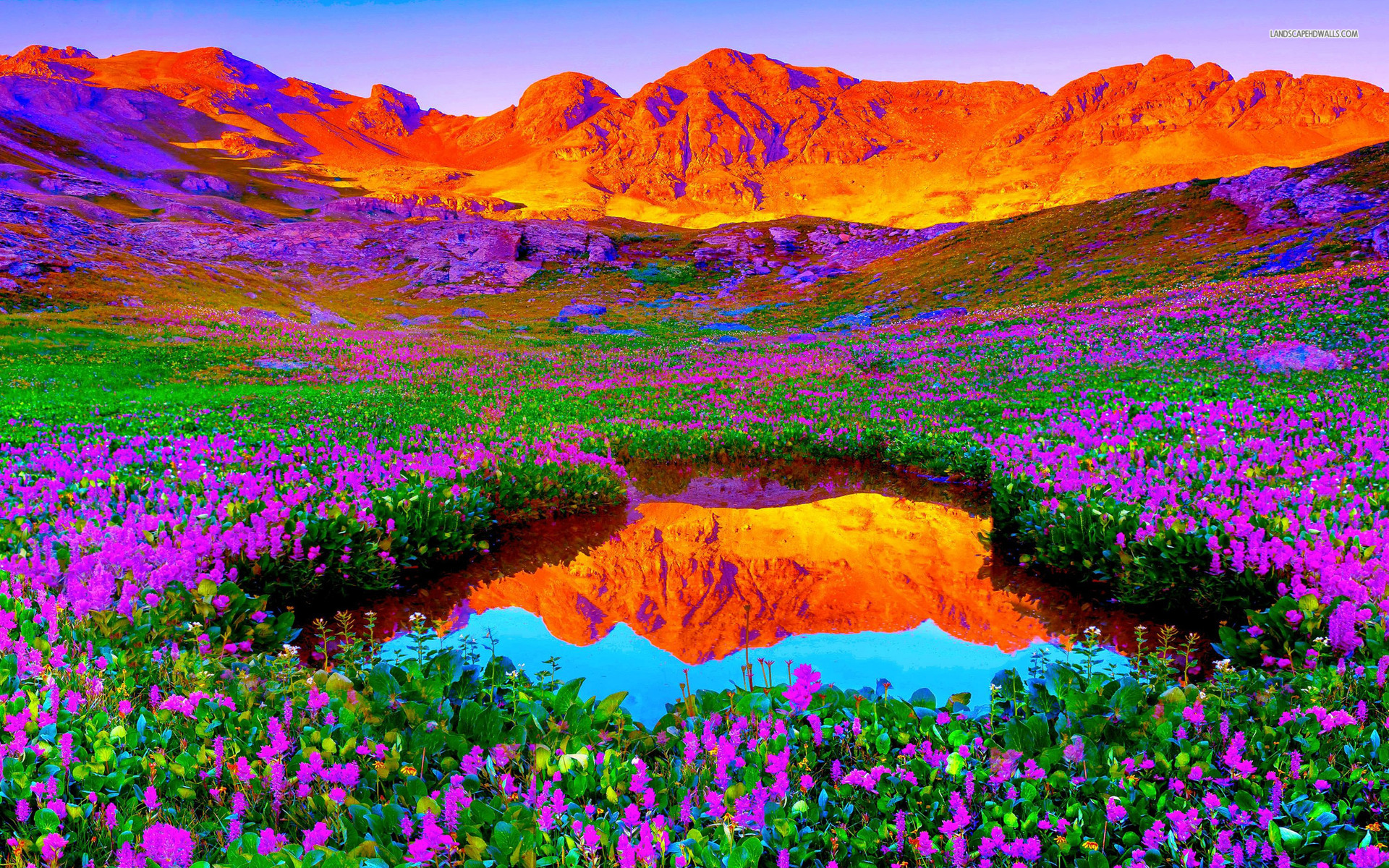 Red mountains lilac flowers wallpapers red mountains - Vibrant background ...