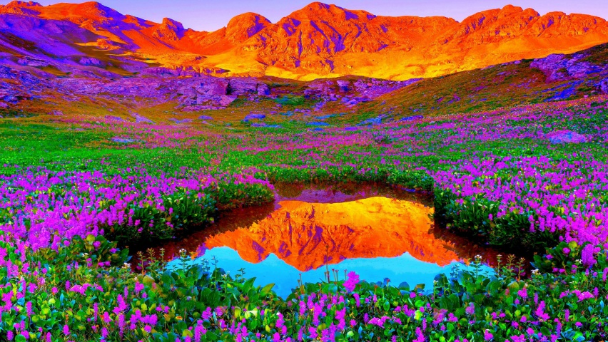 825x315 Red Mountains Lilac Flowers Facebook Cover Photo