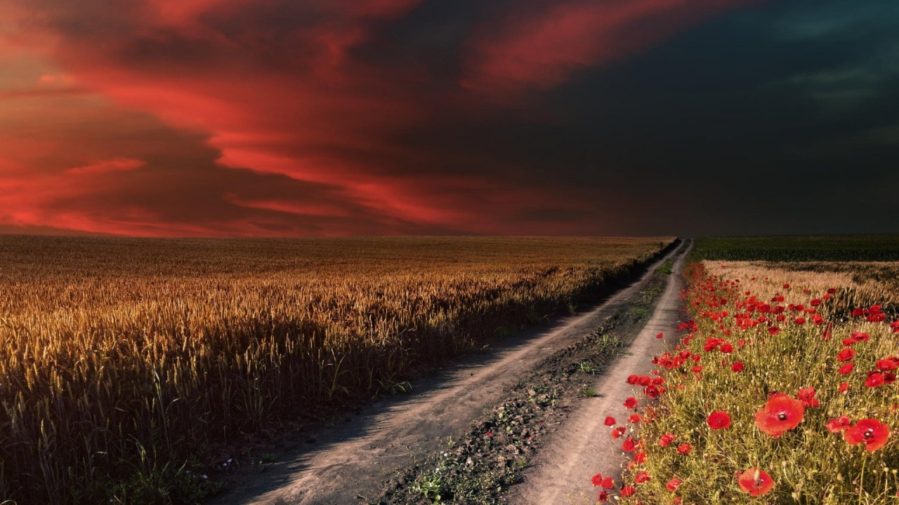 1280x720 Red Sky Path Field Poppies