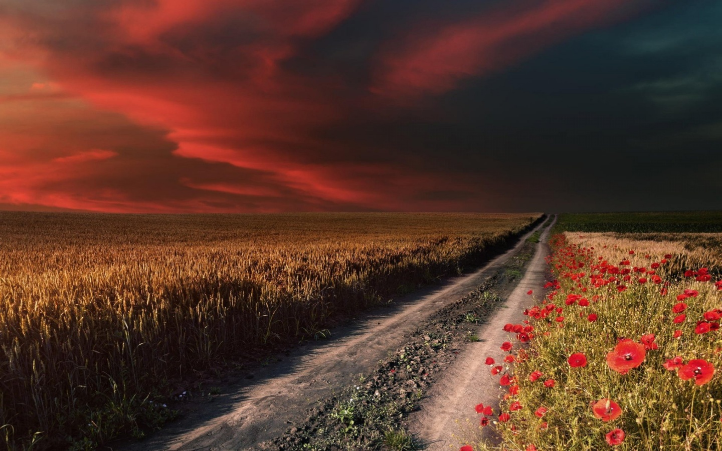 1440x900 Red Sky Path Field Poppies