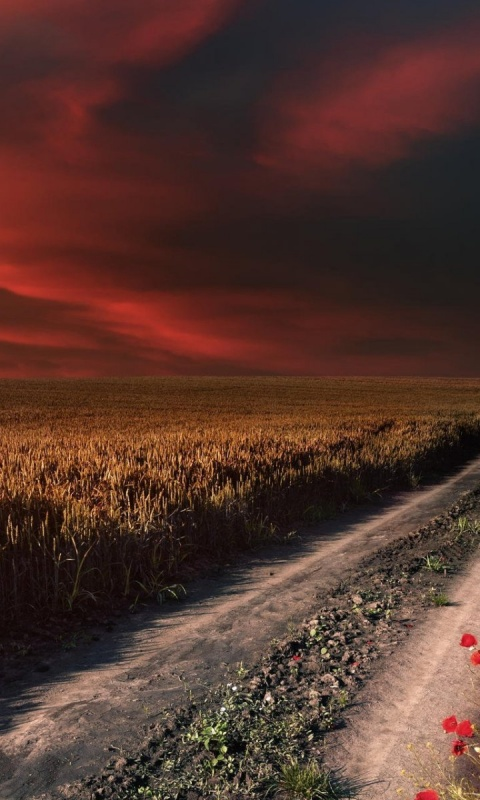 480x800 Red Sky Path Field Poppies