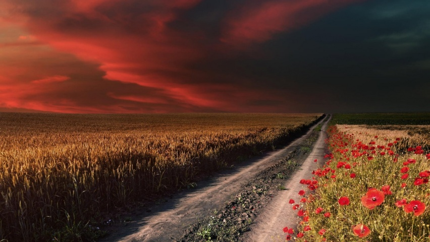 646x220 Red Sky Path Field Poppies