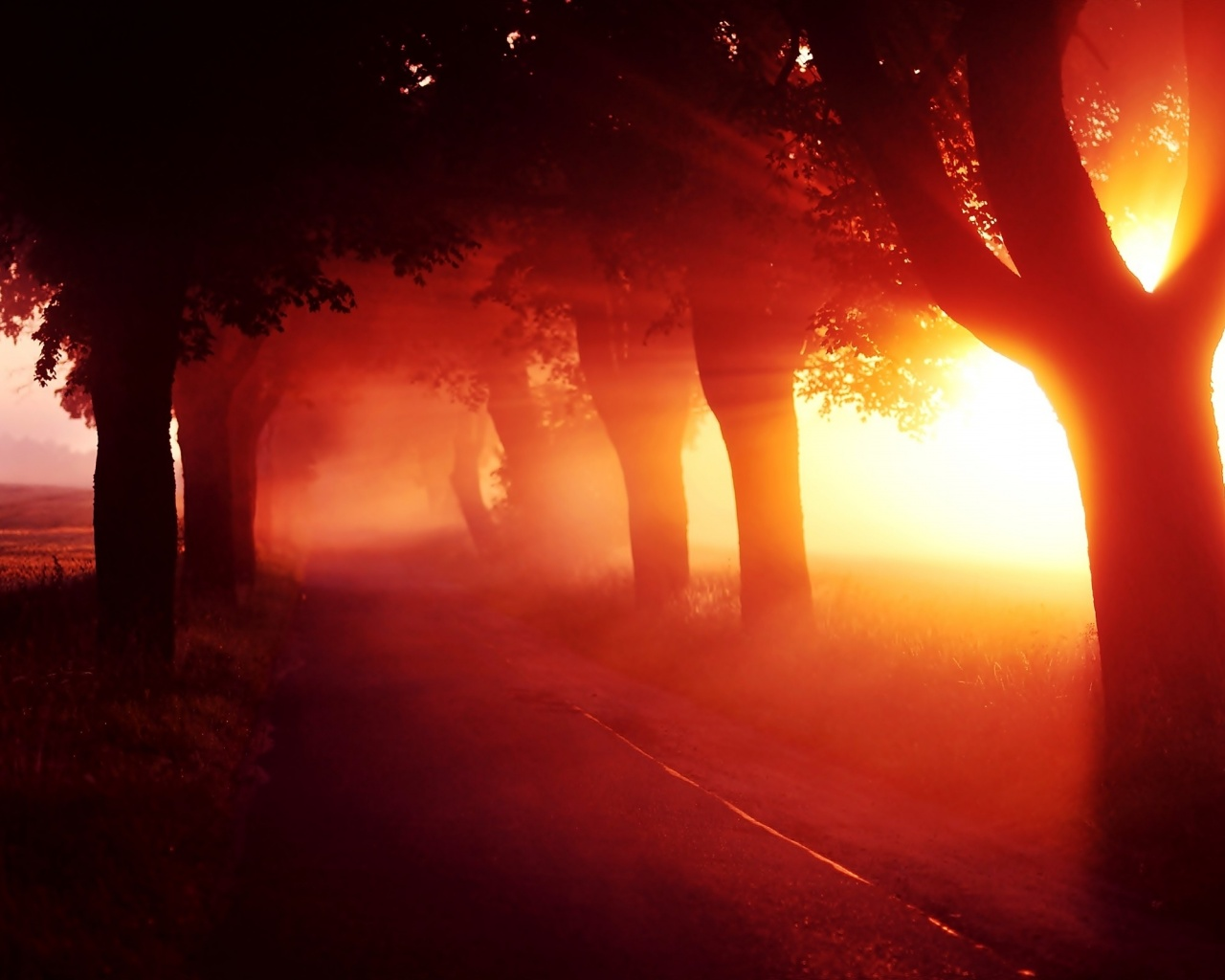 1280x1024 Red Sunset Fog Trees Alley