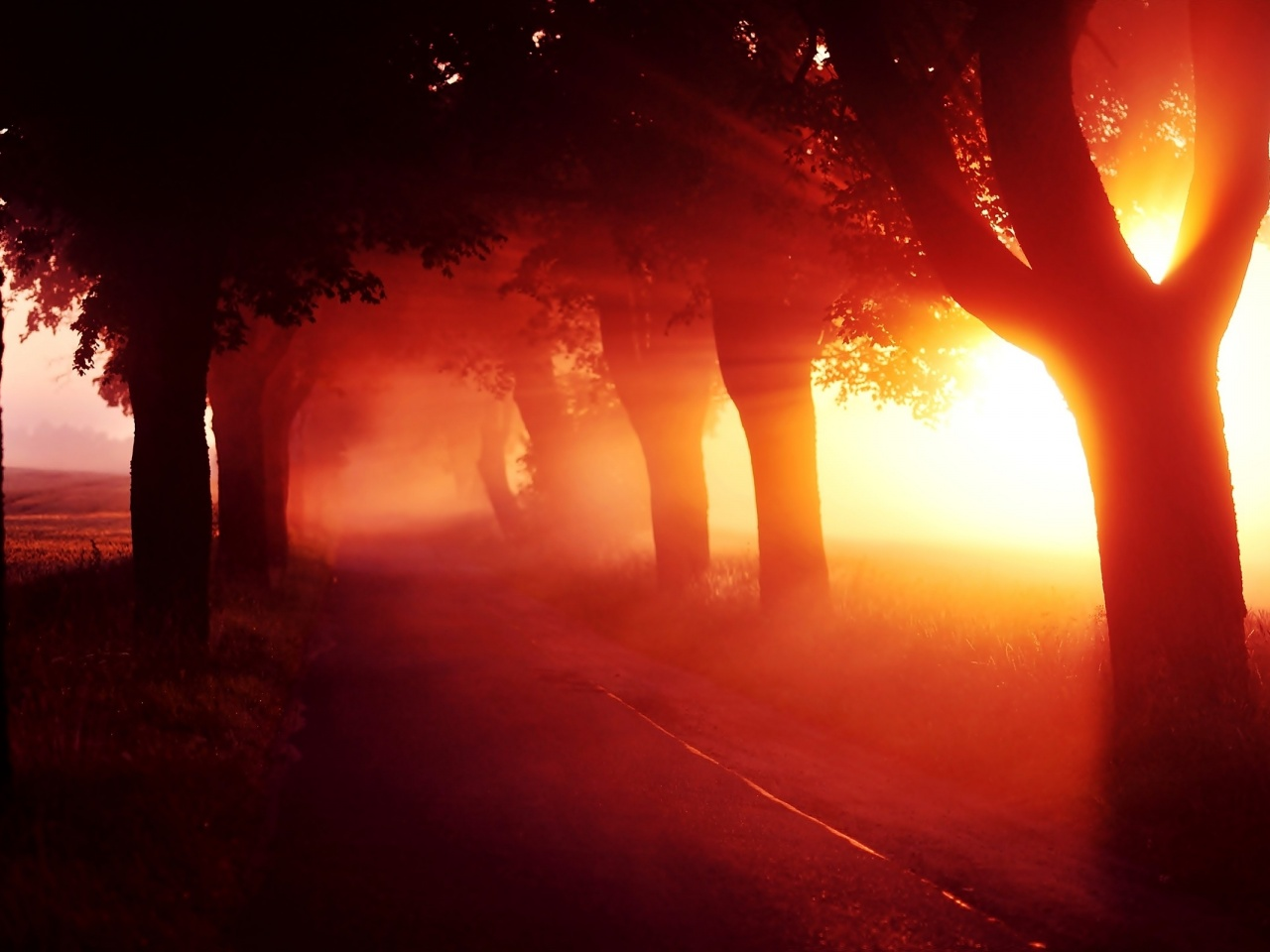 1280x960 Red Sunset Fog Trees Alley