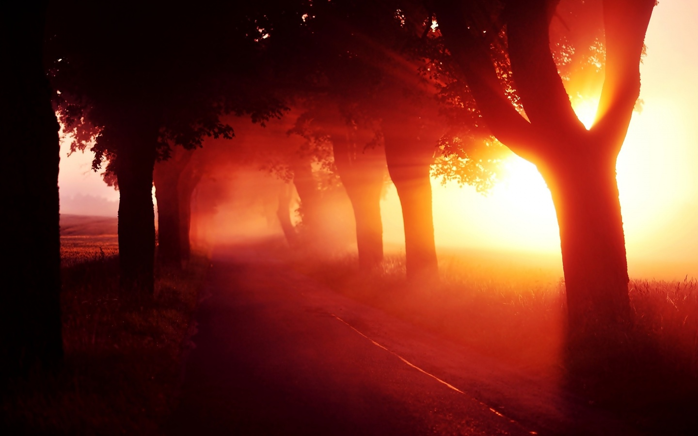 1440x900 Red Sunset Fog Trees Alley