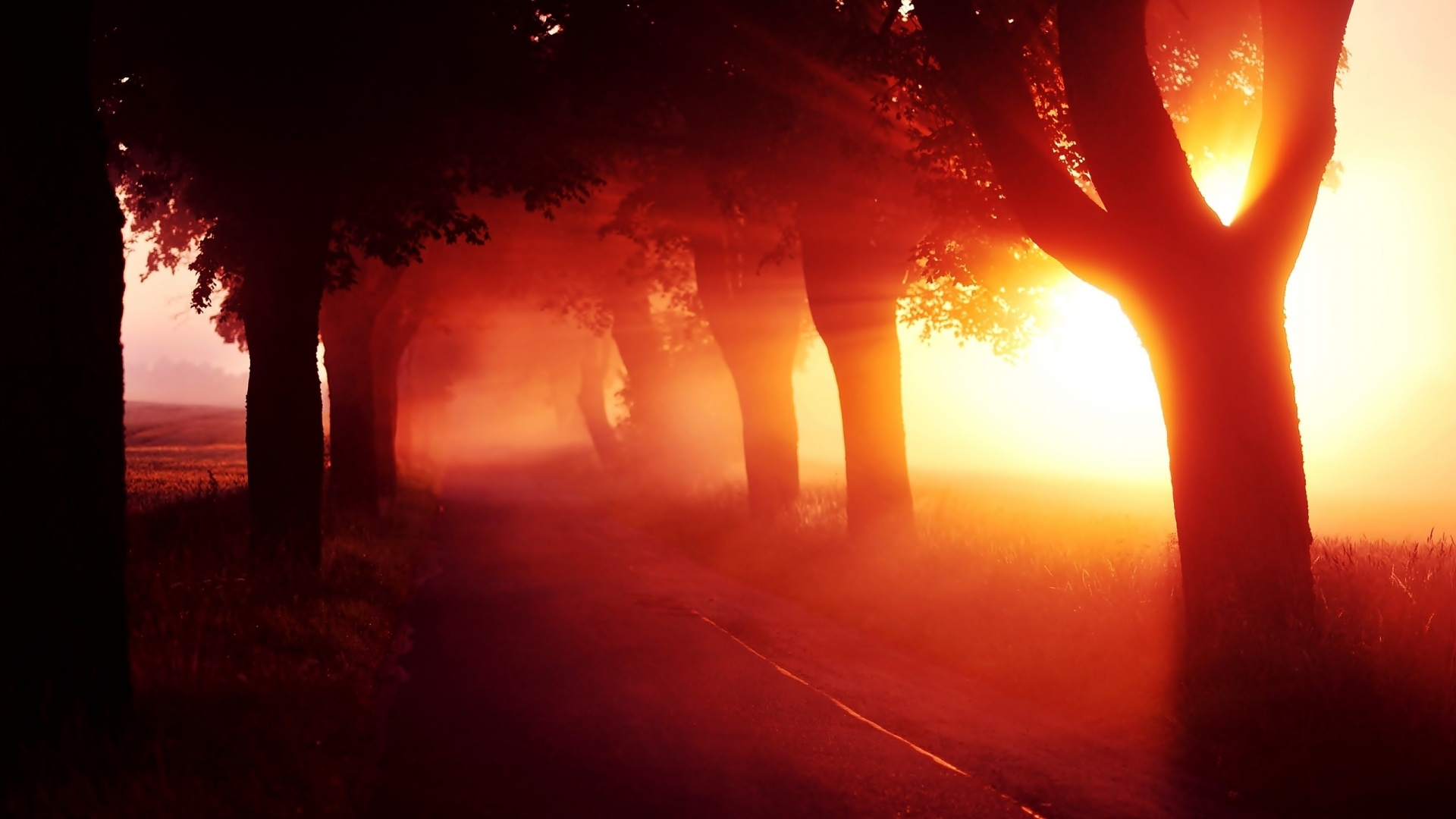 1920x1080 Red Sunset Fog Trees Alley
