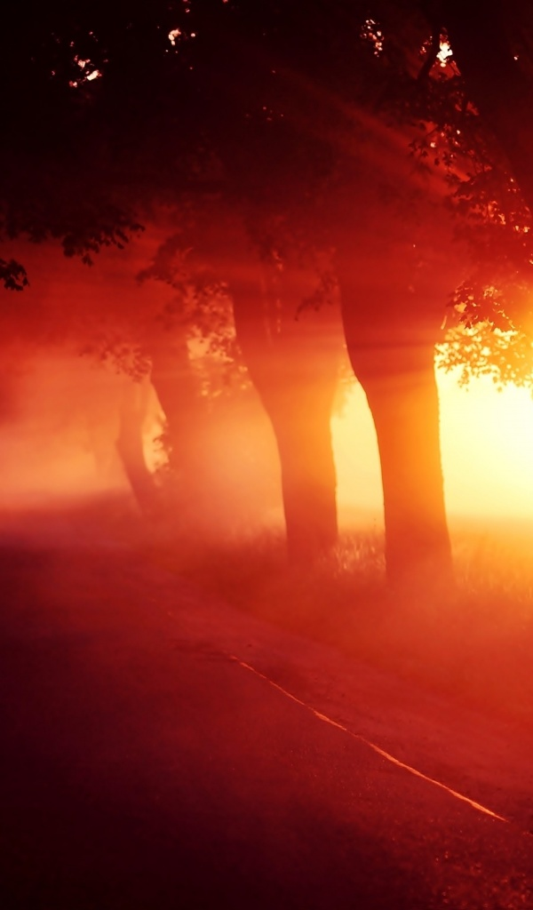 600x1024 Red Sunset Fog Trees Alley