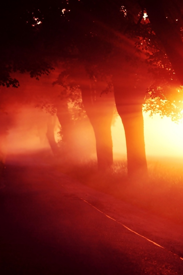 640x960 Red Sunset Fog Trees Alley
