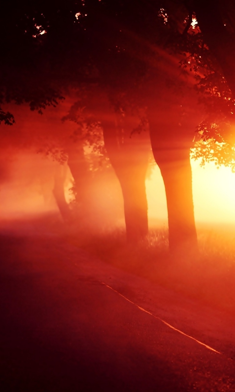 768x1280 Red Sunset Fog Trees Alley