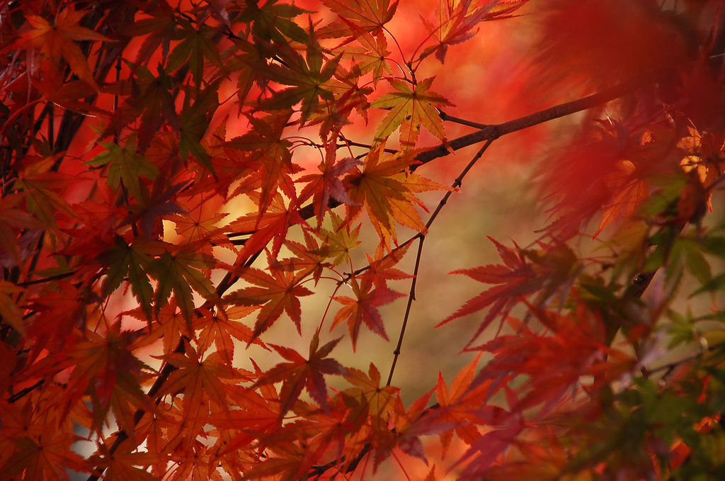 1024x679 Red Tree Leaf desktop PC and Mac wallpaper