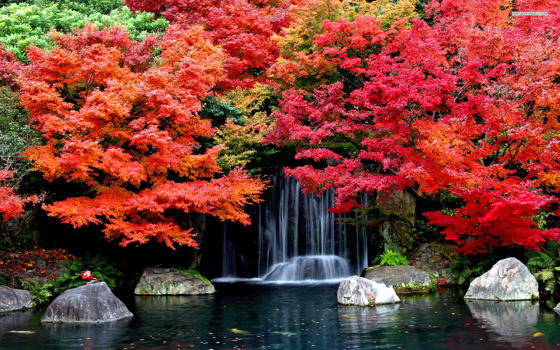 red trees waterfall rocks lake wallpapers