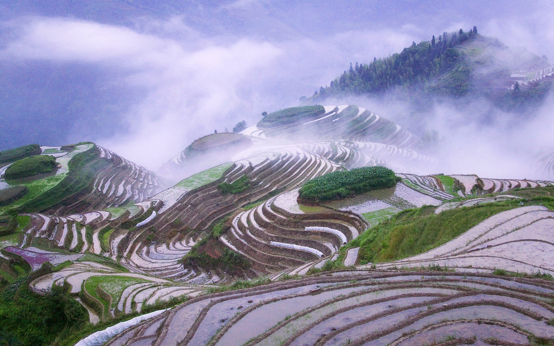 rice fields wallpapers