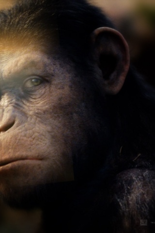 320x480 Rise Of The Planet Of The Apes Caesar Iphone 3g
