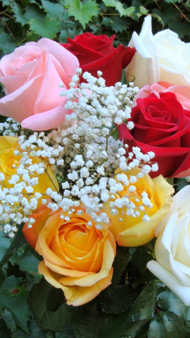 640x1136 Rose Bouquet,  colorful