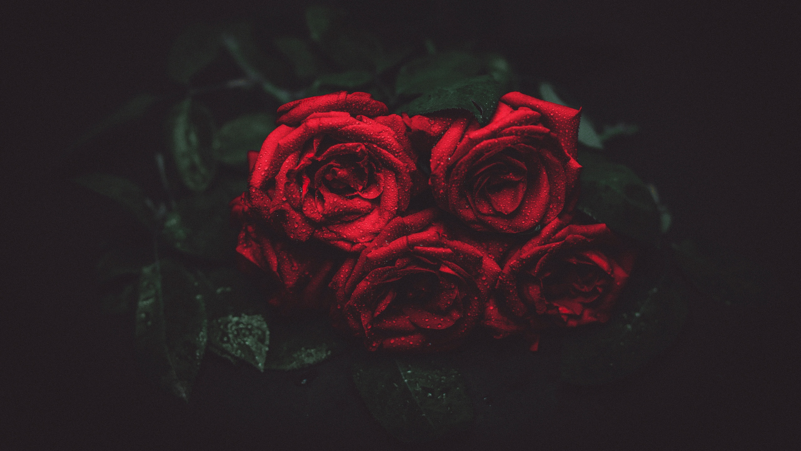 2560x1440 roses, drops, buds YouTube Channel Cover