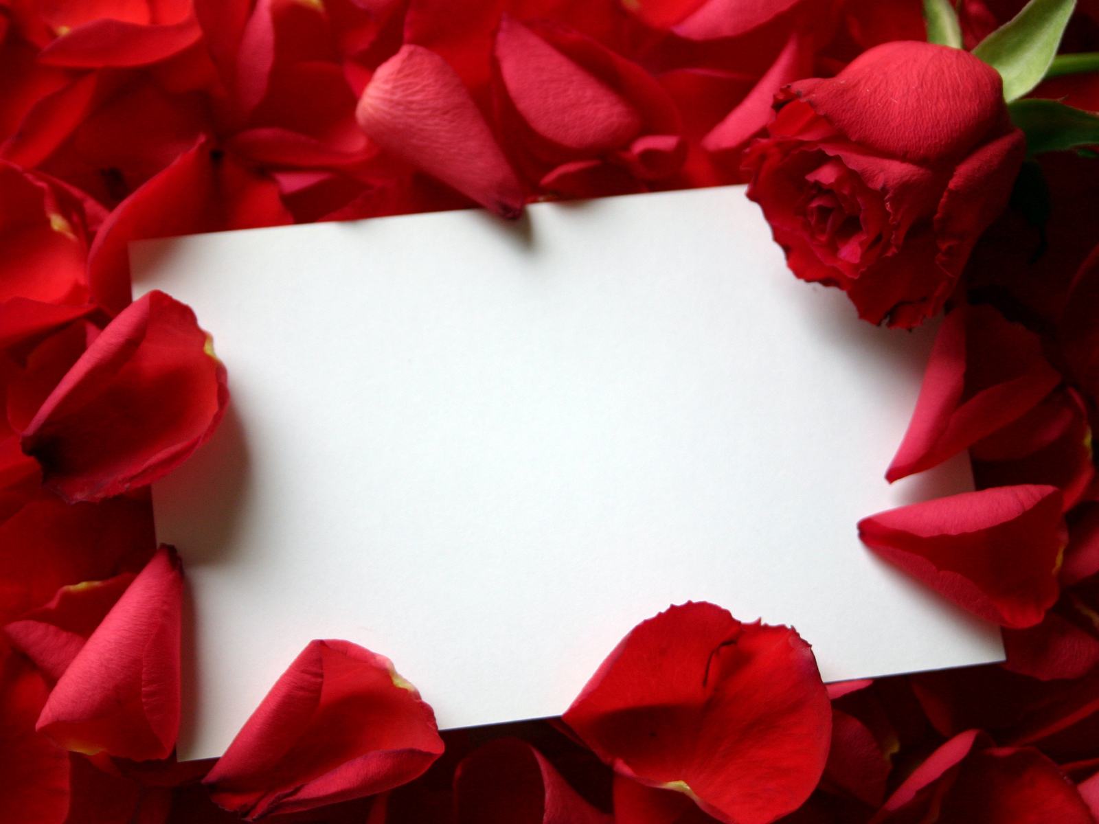 1600x1200 Roses and letter desktop PC and Mac wallpaper