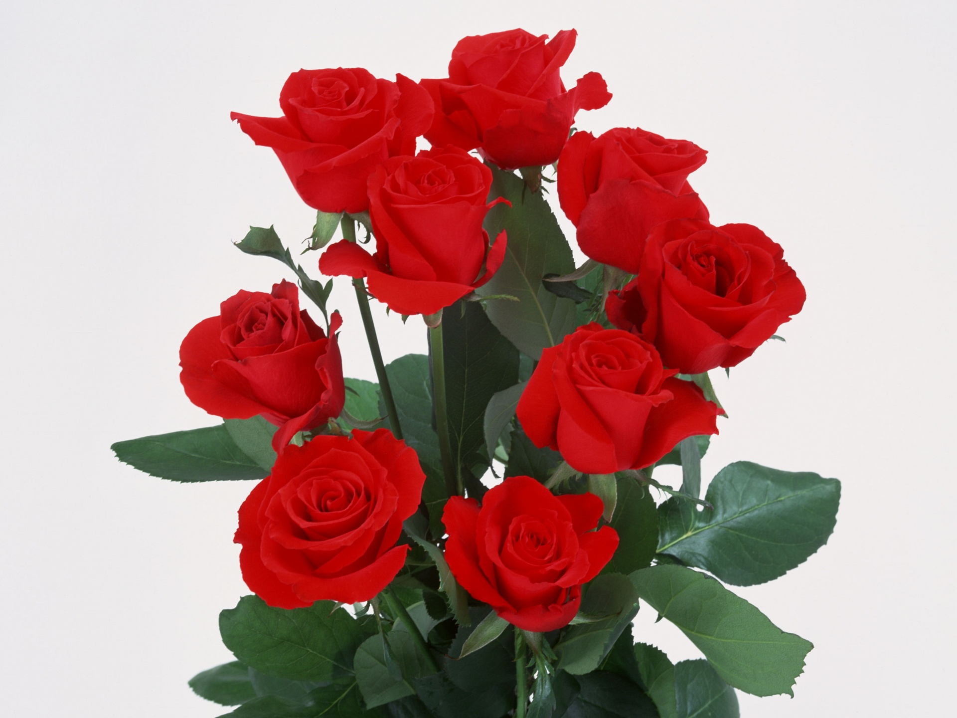 Roses bunch wallpapers roses bunch stock photos - Bunch of roses hd images ...