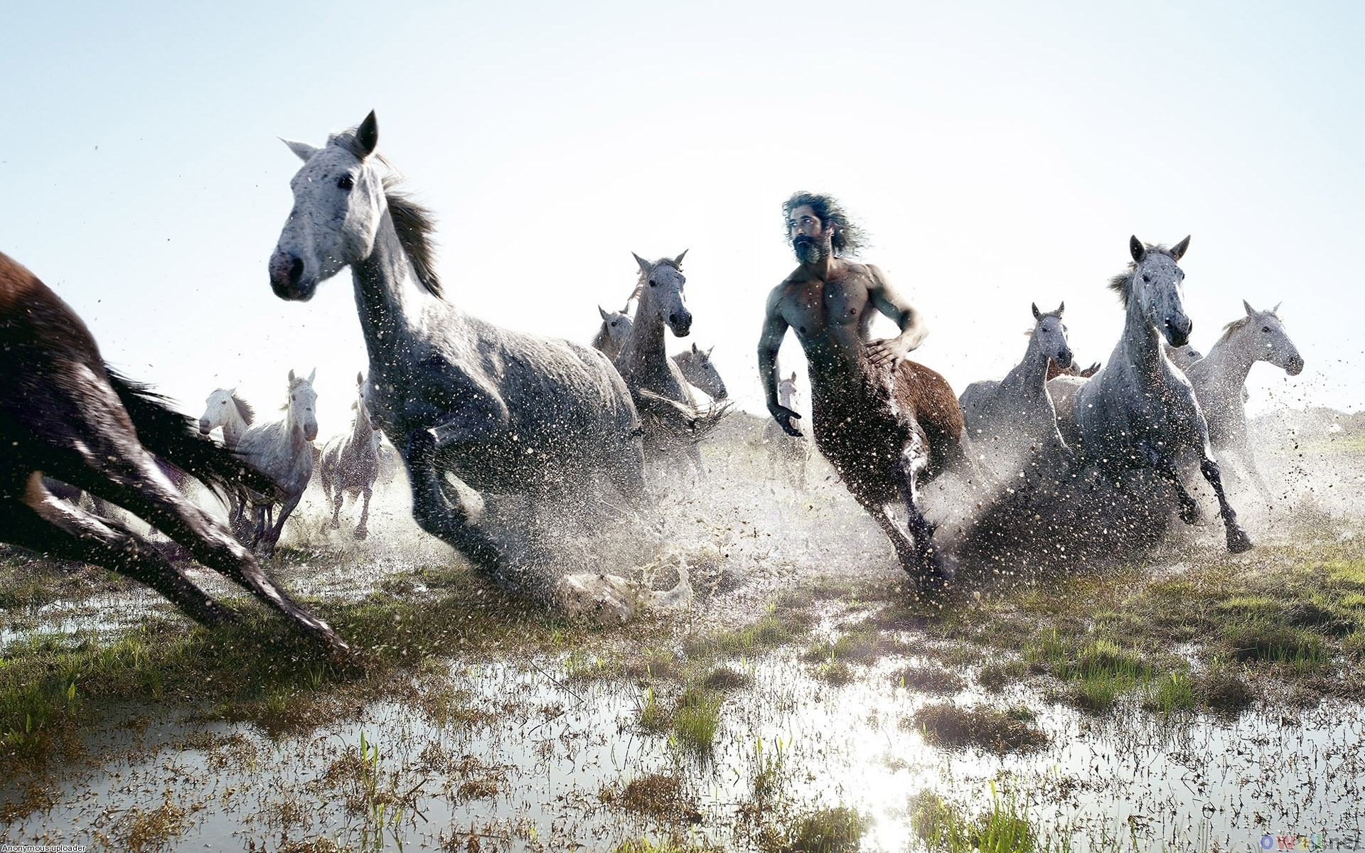 Trends For Wallpaper 3d Horse Running Horse Hd Images Images