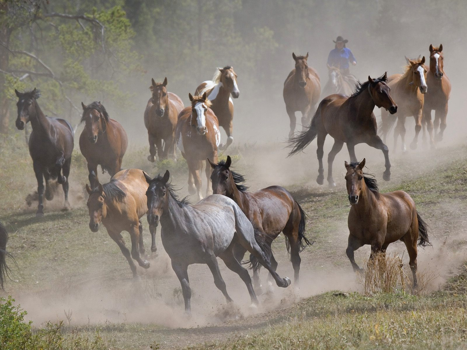Image Running Horses Wallpapers And Stock Photos