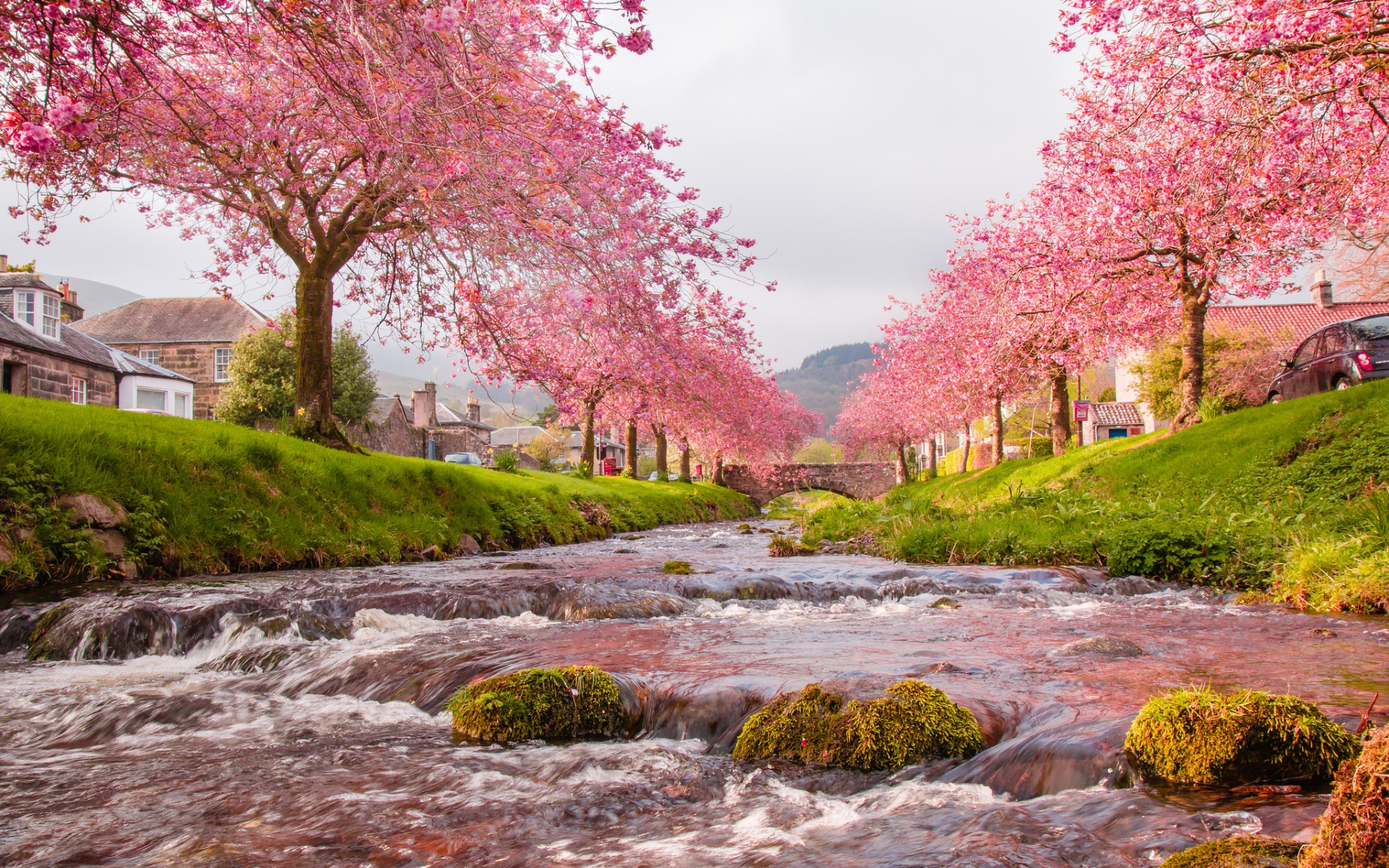 rushing river pink trees house wallpapers rushing river