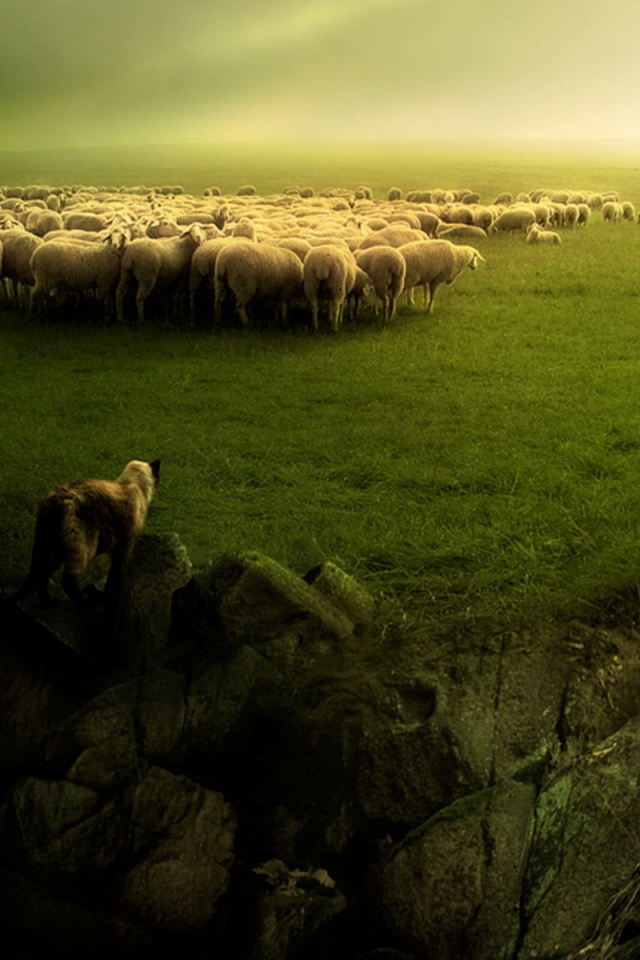 640x960 Sheep And Wolf Iphone 4 Wallpaper