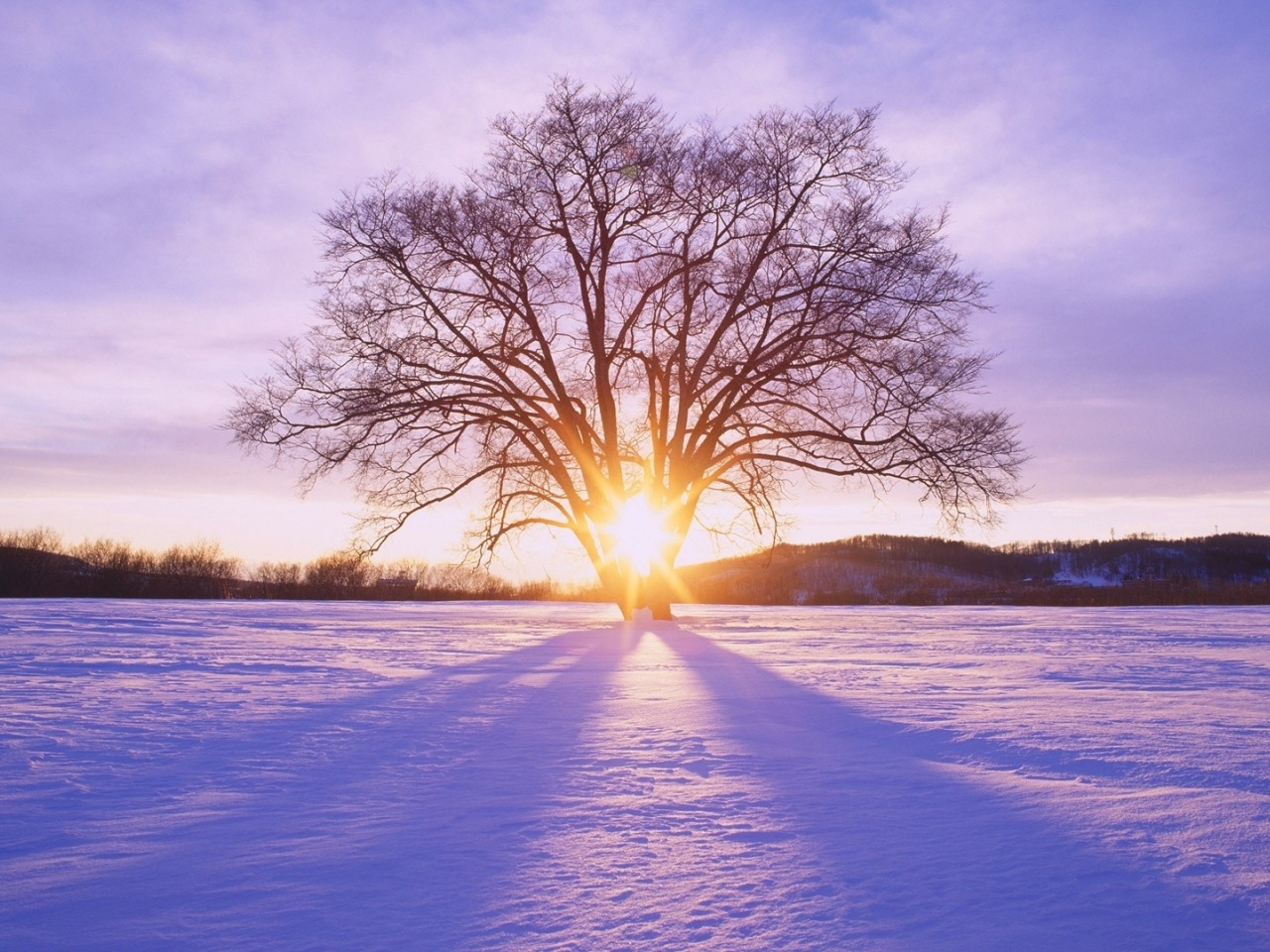 1280x720 Shiny Sun Tree & Snow Scenery