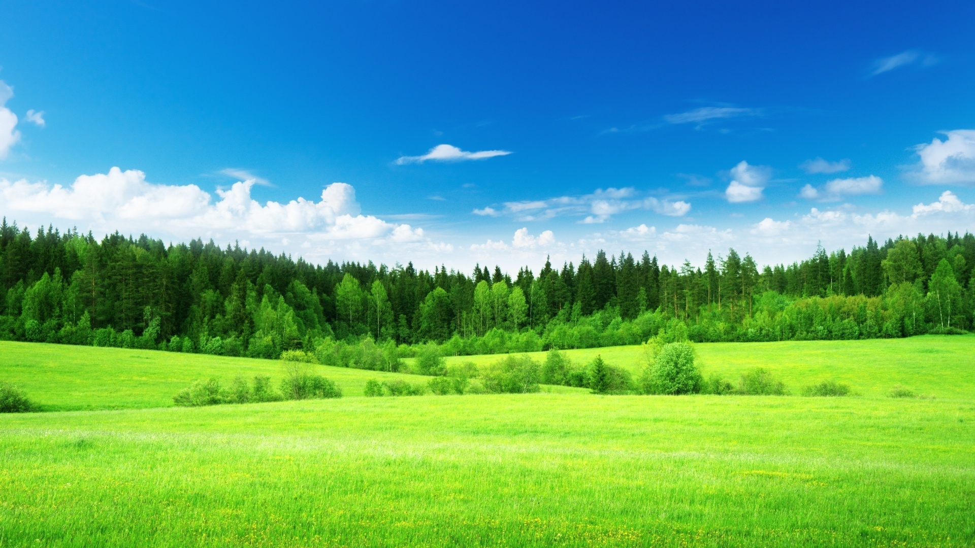 1920x1080 Sky Trees Amp Grass Green Meadow Desktop Pc And