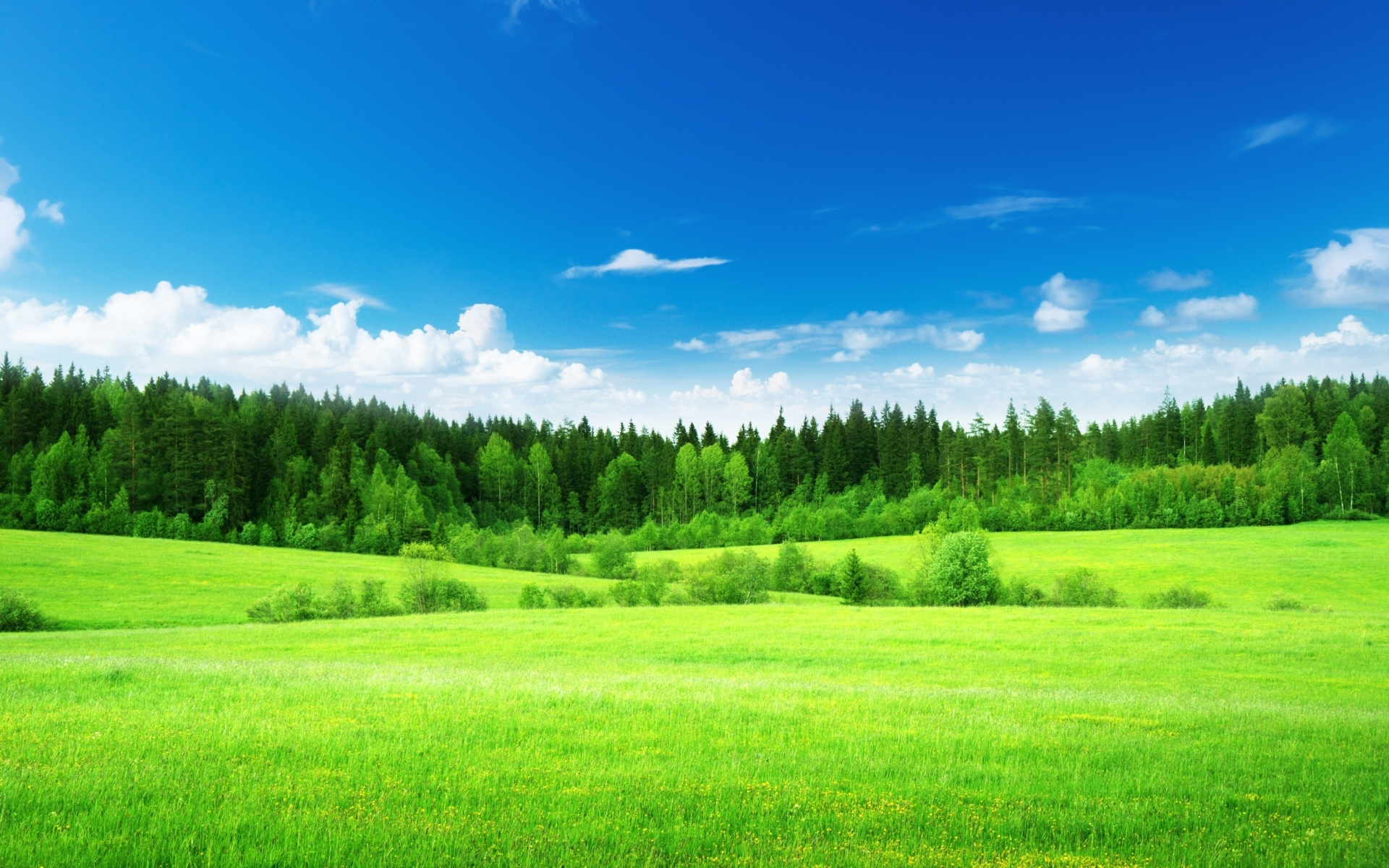 Image Sky Trees Grass Green Meadow Wallpapers And Stock Photos