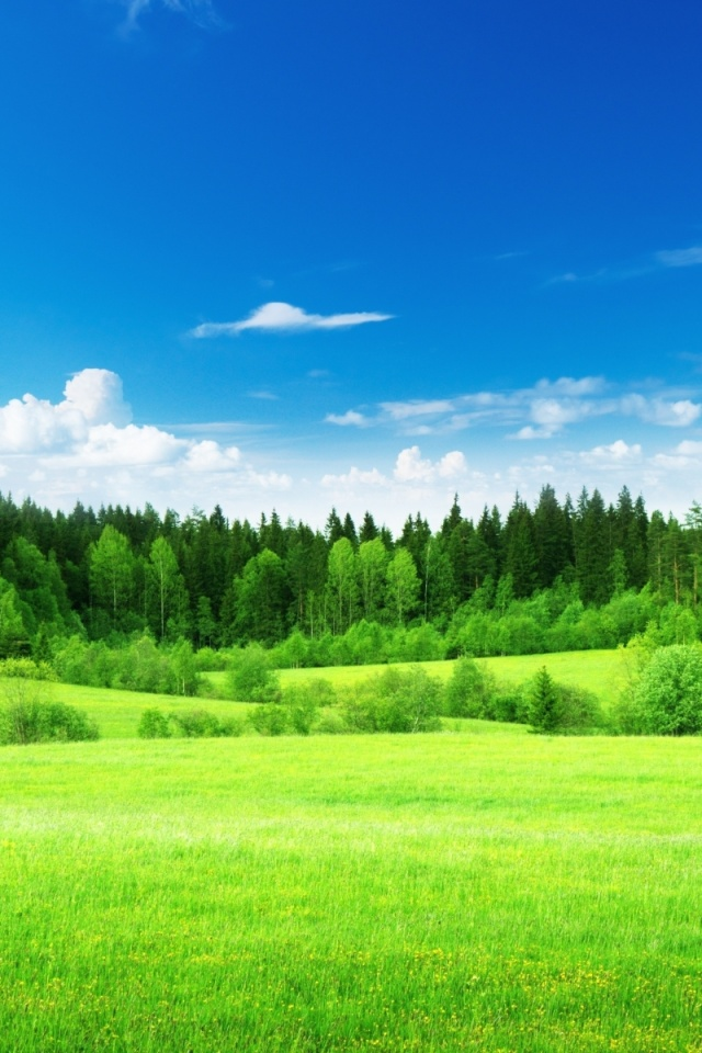 640x960 sky trees grass green meadow desktop pc and mac