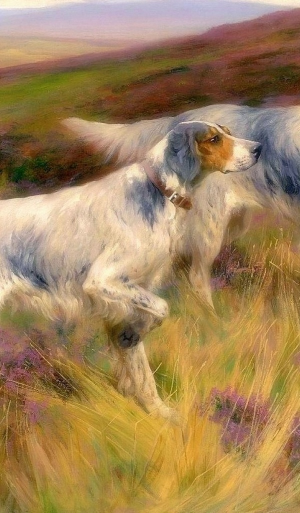 600x1024 Smart English Setter Meadow