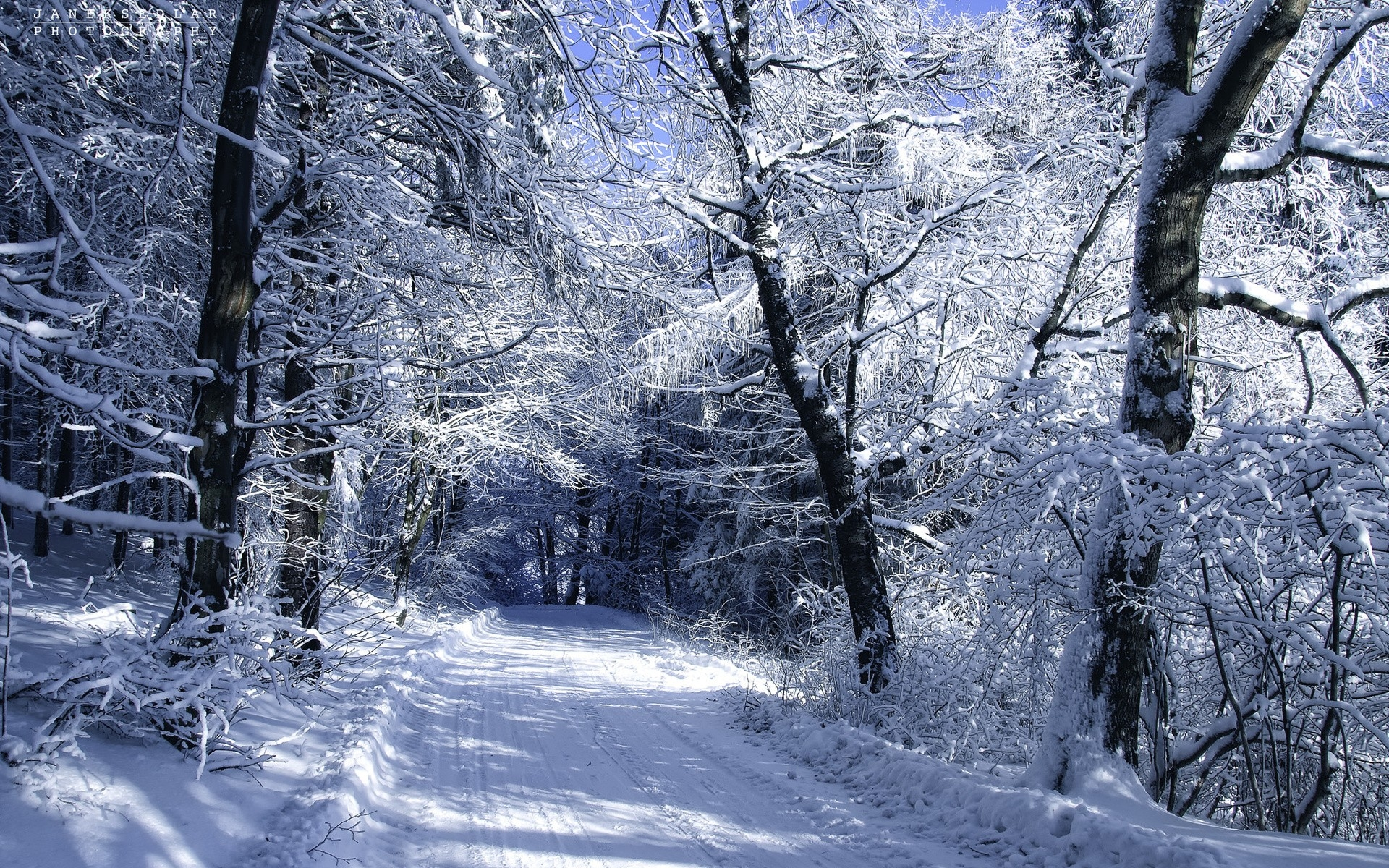 Winter Snow Zoom Background