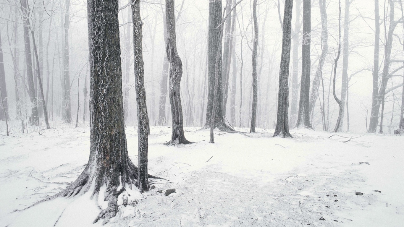 1366x768 Snow Forest Desktop Pc And Mac Wallpaper