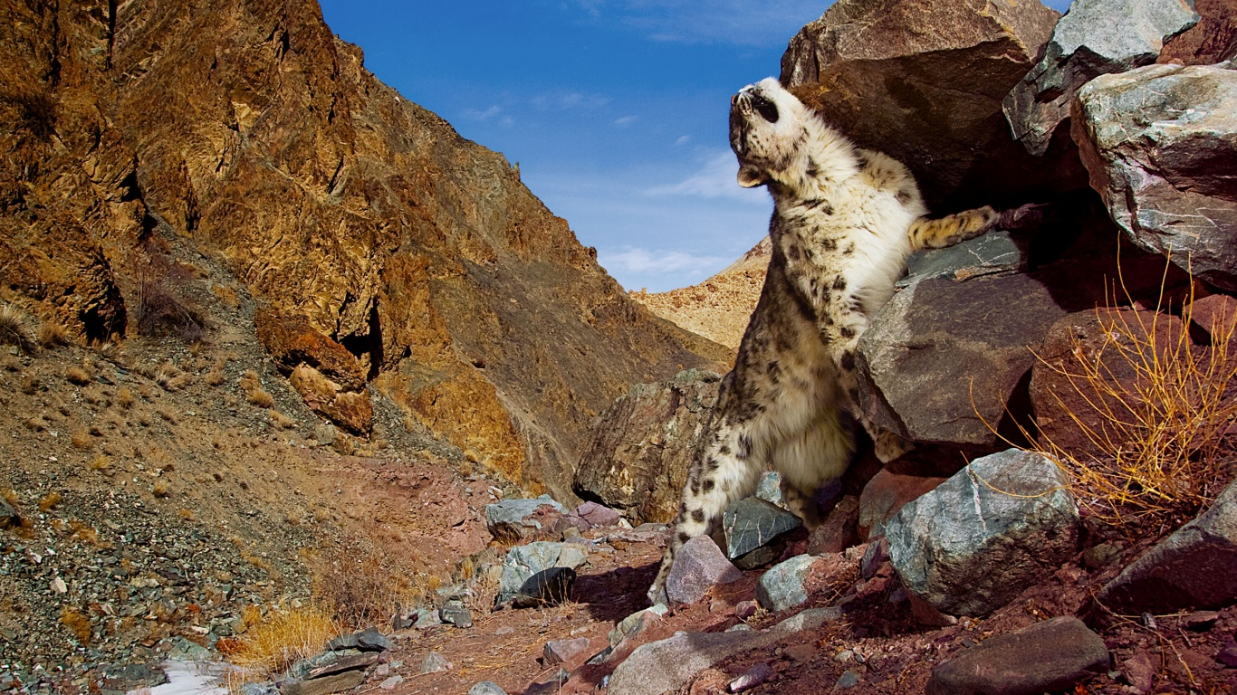 1366x768 Snow Leopard Scratch Desktop PC And Mac Wallpaper