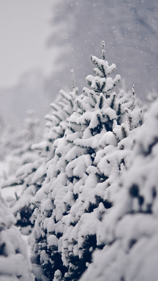 pin snow wallpapers trees - photo #24