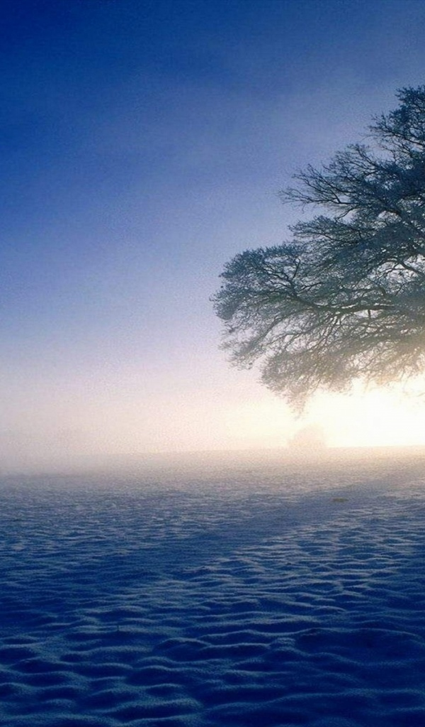 600x1024 Snow Tree Sun Amp Shadow Galaxy Tab 2 Wallpaper