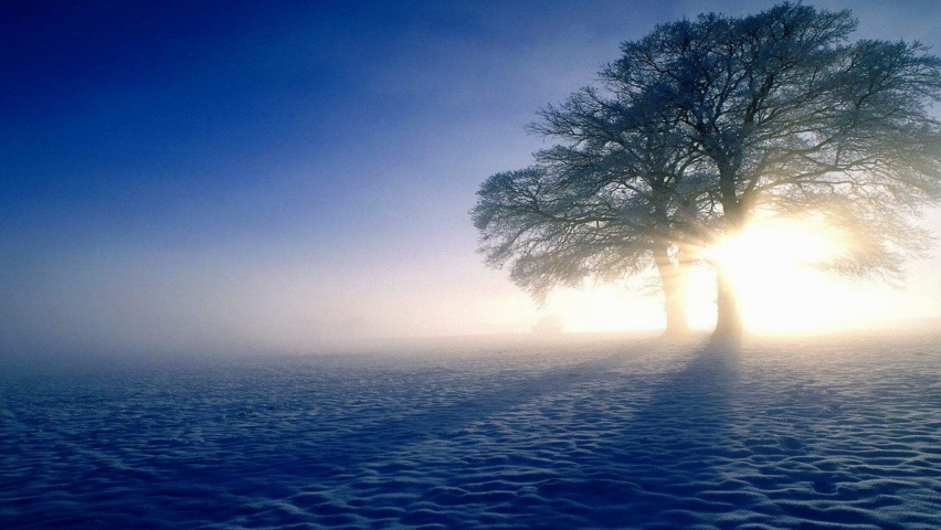 852x480 Snow Tree Sun Amp Shadow Desktop Pc And Mac Wallpaper