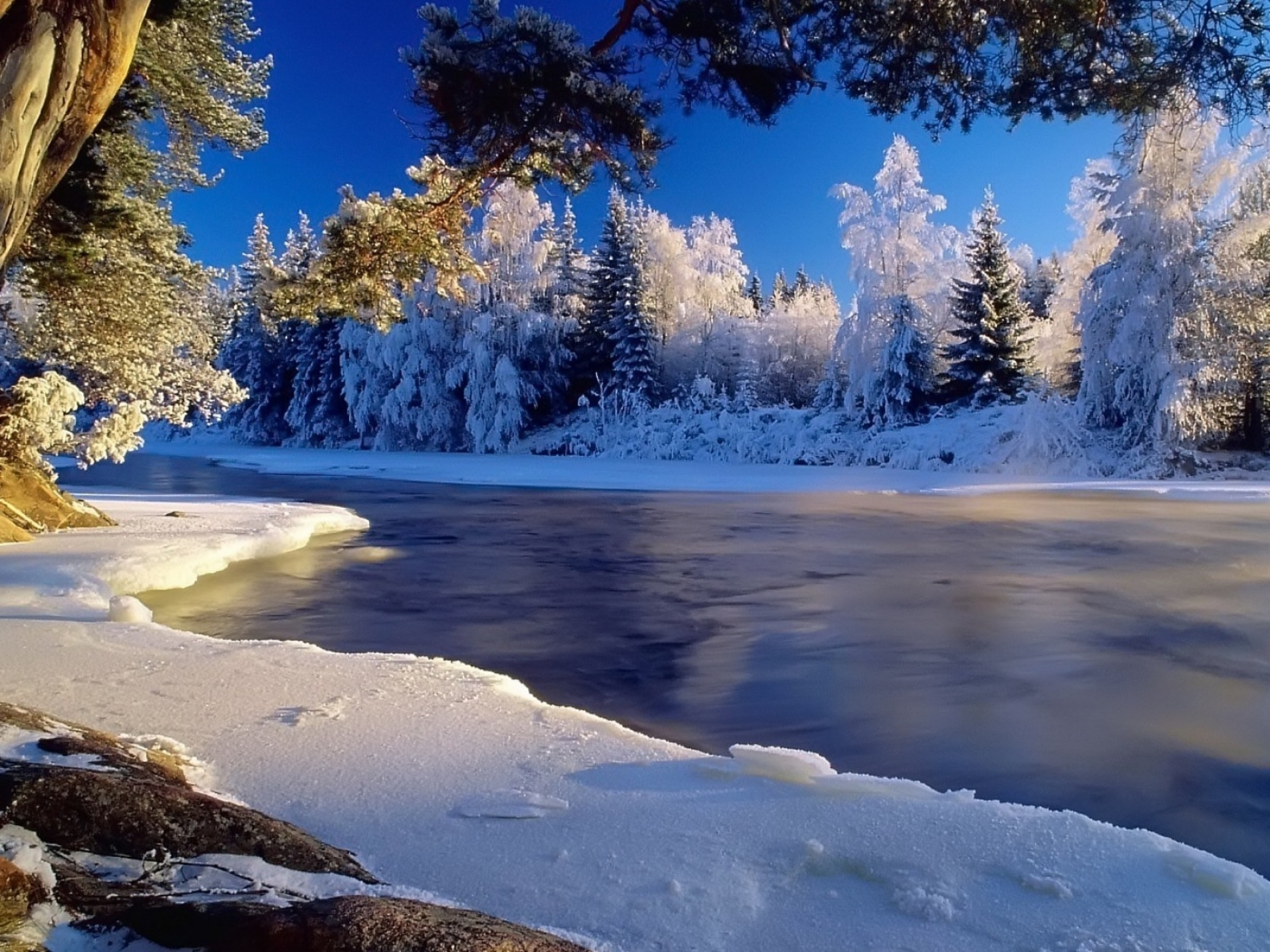 Frozen River Winter Forest Snow Nature Rivers Trees Forests ...