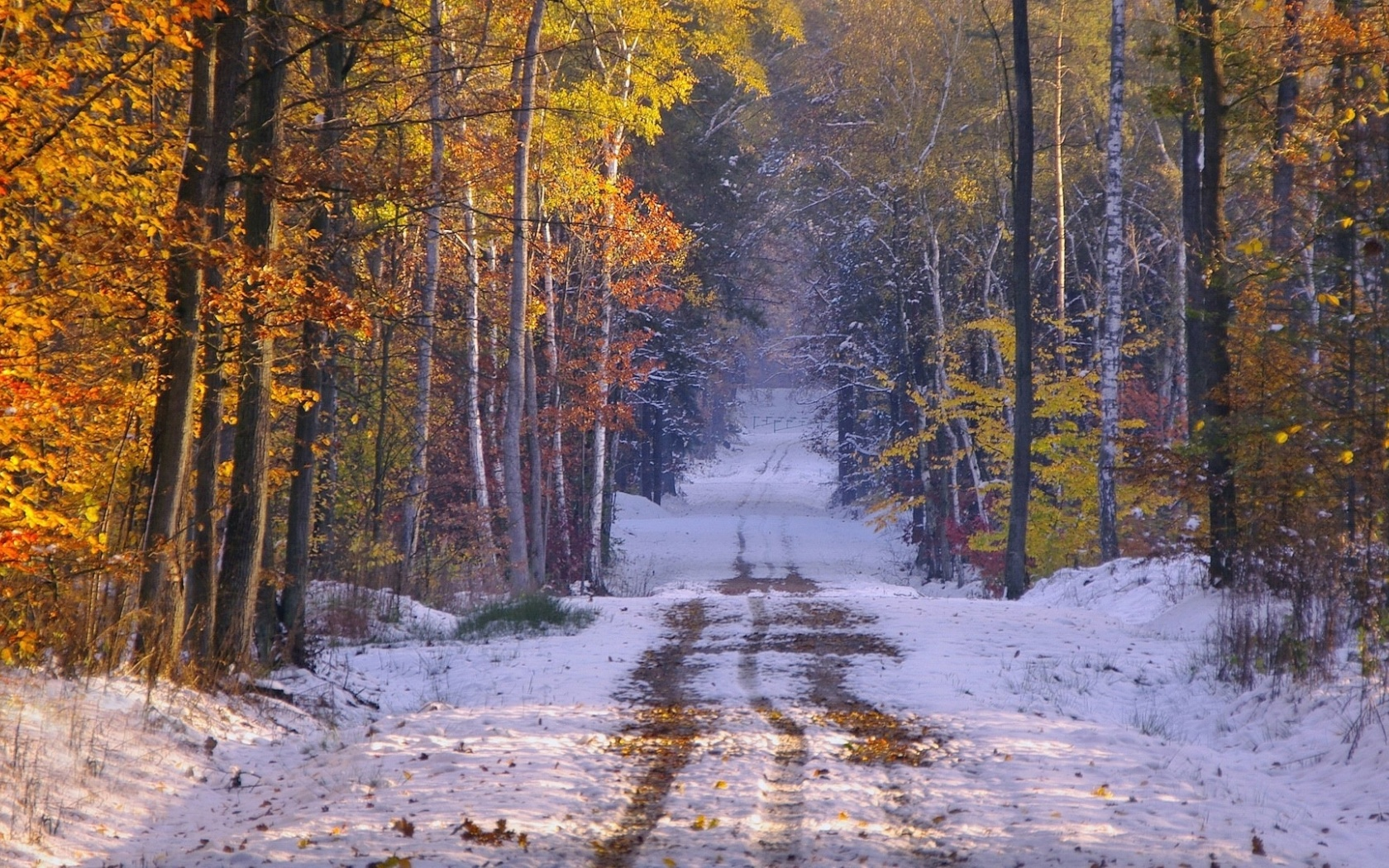 1680x1050 Snowy Path Forest Late Autumn Desktop Pc And Mac