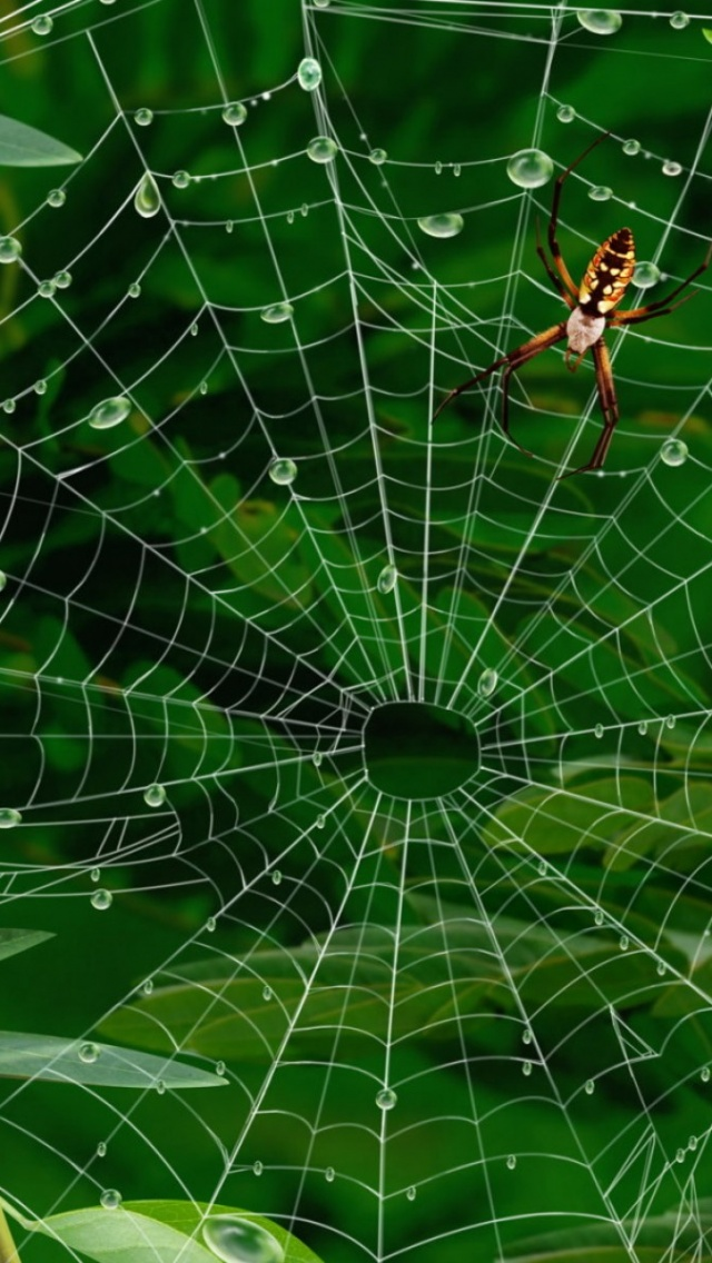640x1136 Spiderweb Spider Twigs Leaves Iphone 5 Wallpaper