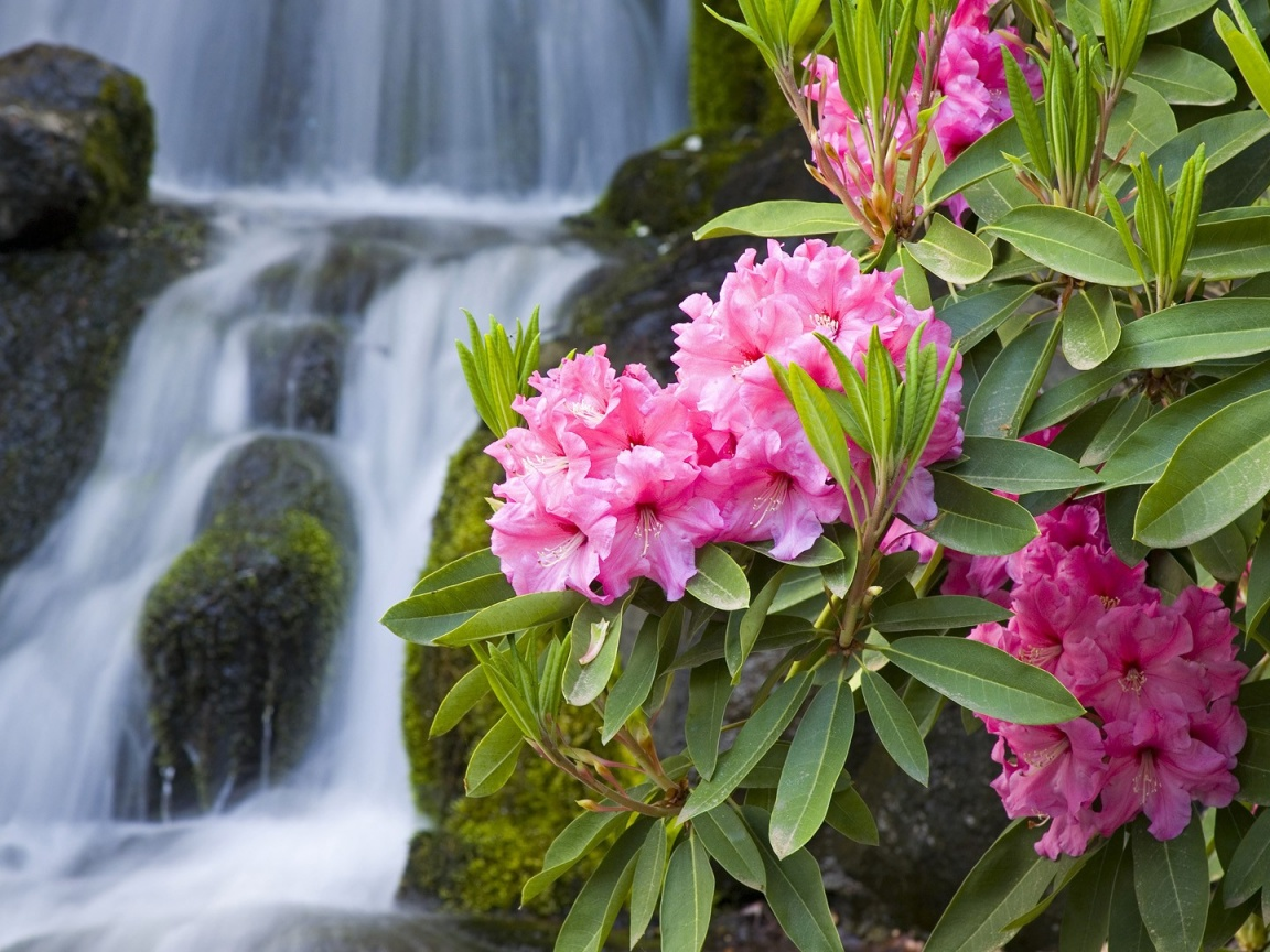 1152x864 spring flowers and waterfall desktop pc and mac wallpaper