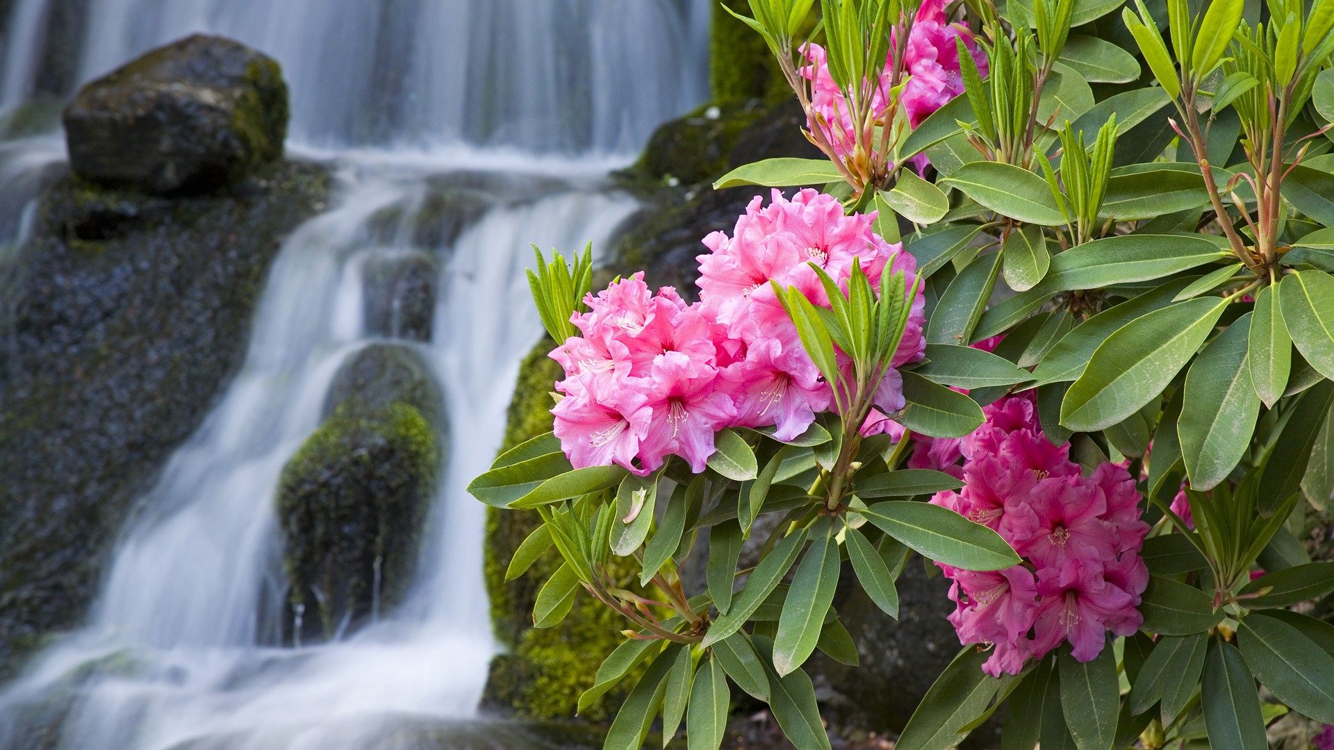 1920x1080 Spring Flowers And Waterfall Desktop Pc And Mac Wallpaper